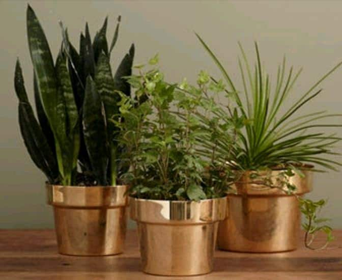 metal planters for succulents