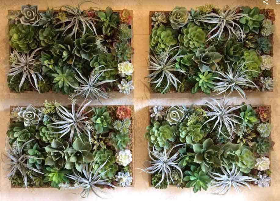 Succulents in hanging wall arrangement