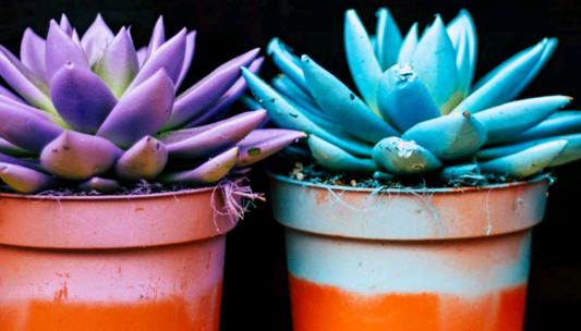 plastic pots for succulents