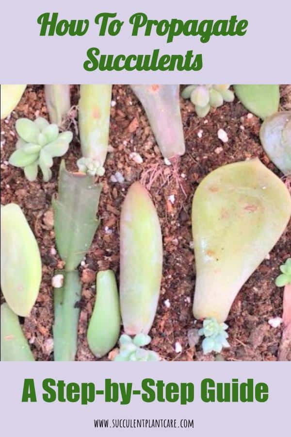 4 Easy Ways to Propagate Succulents: A Step-by-Step Guide