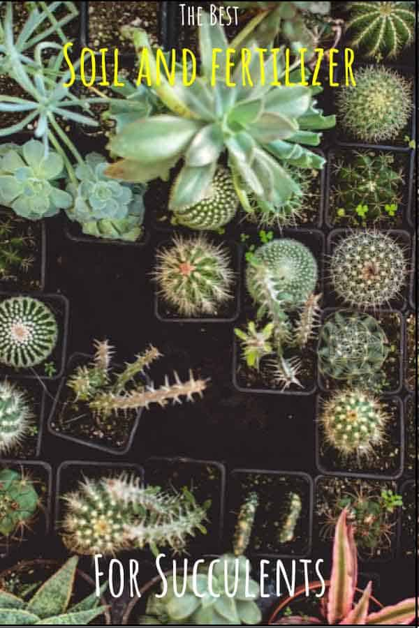 Best Soil and Fertilizer for Cacti and Succulents