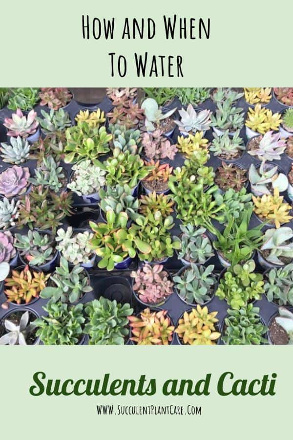 assorted succulents in nursery pots
