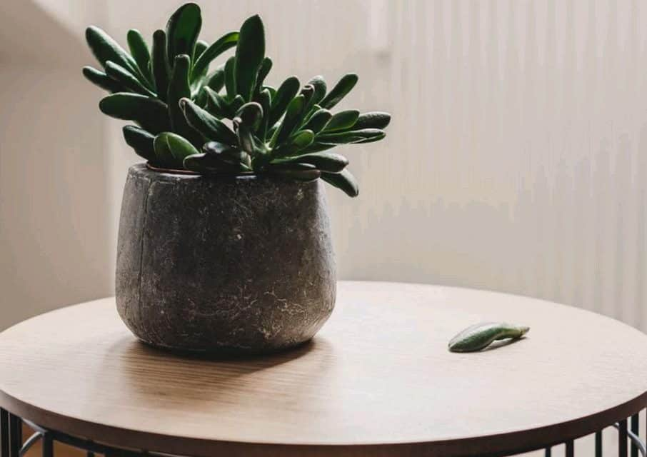 Top 12 Low Light Succulents And Cacti