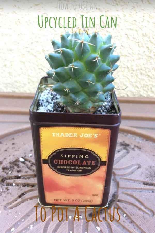 Grow Your Own Cactus Gift Tin