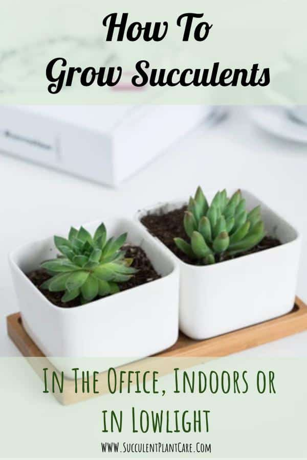 How To Grow Succulents In the Office, Indoors or In Low Light