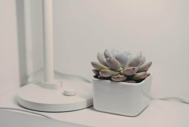Succulents In the Office, Indoors or In Low Light