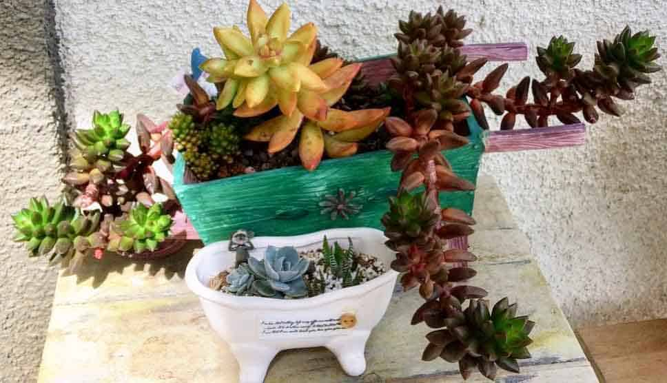 Sedeveria 'Jet Beads' and sedum nussbaumerianum in wagon planter