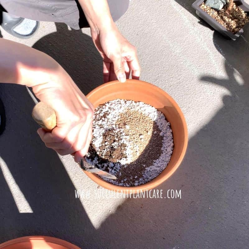 Mixing succulent potting mix with perlite and calcined clay